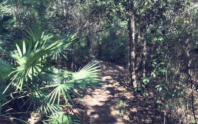 UWF Mountain Bike Trails